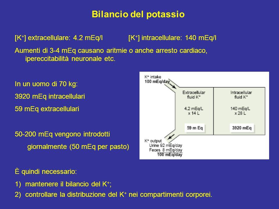 Bilancio del potassio [K+] extracellulare: 4.2 mEq/l [K+] intracellulare: 140 mEq/l.